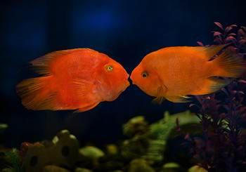 榆林观赏鱼缸订作三湖慈鲷有哪些常见疾病 榆林龙鱼论坛