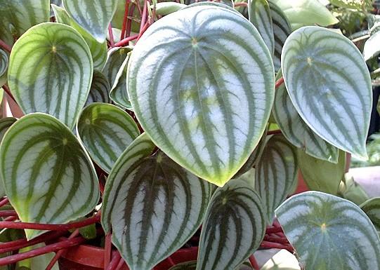 西瓜花盆可爱图片