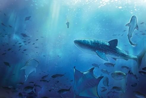 深海鱼油的功效与作用有哪些