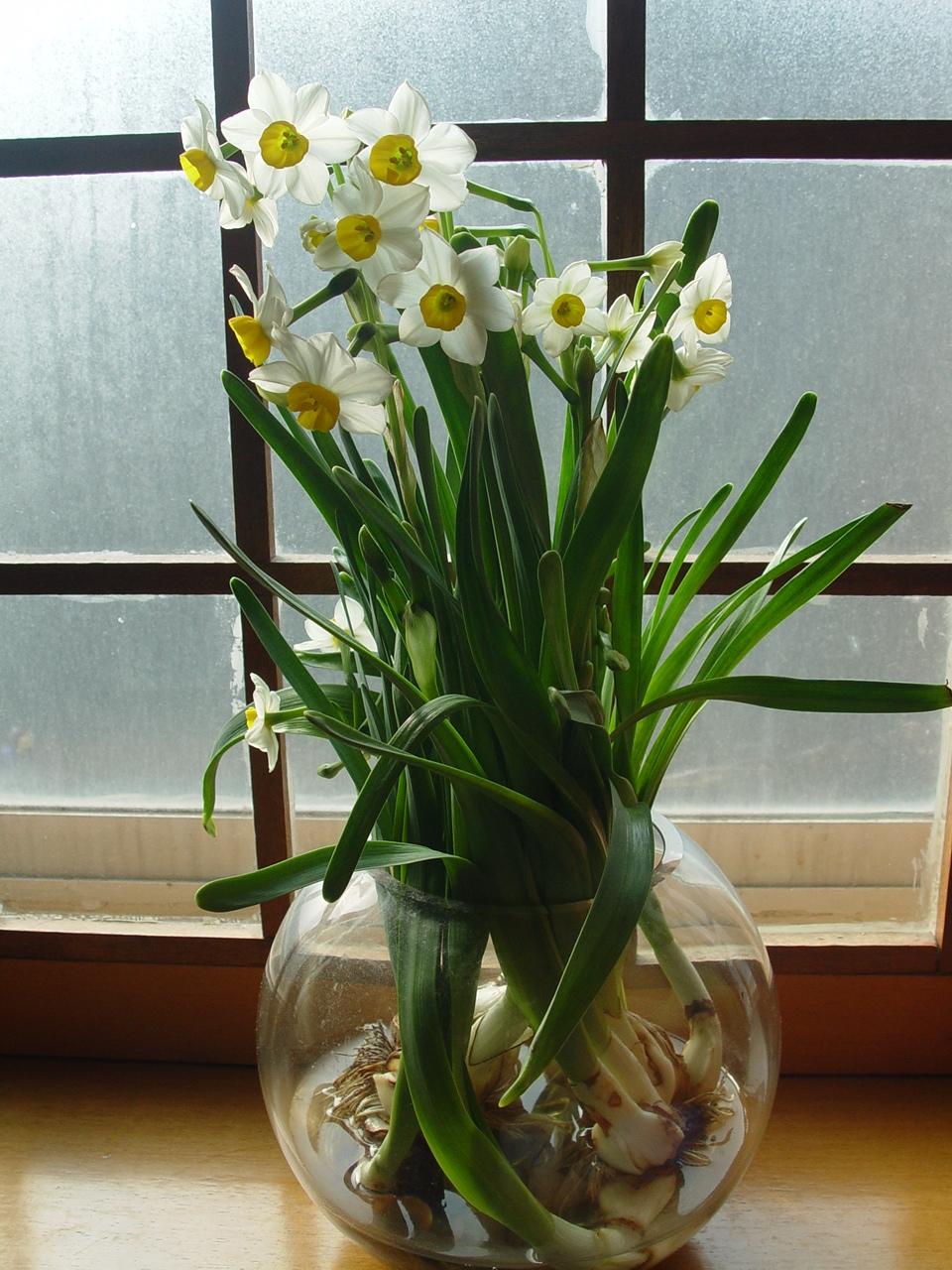 水仙花的养殖方法